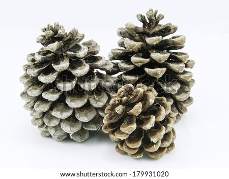 Isolated Pine cones  - stock photo