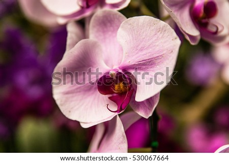 isolated pink orchid