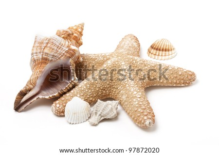Isolated Queen Conch and star fish - stock photo