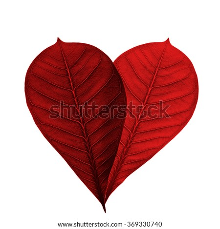 isolated red leaves - stock photo
