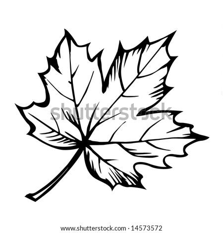 Maple Leaf Tattoo Stock Photos