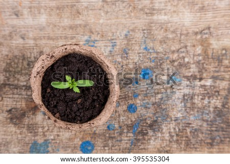 isolated small green seedings in round pots from turf - stock photo