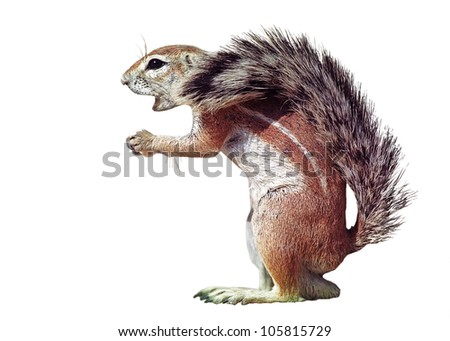 Isolated squrrel over white