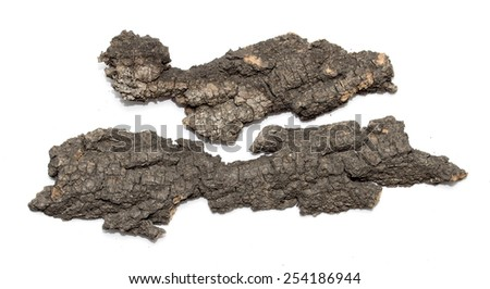 isolated  stub log bark with wooden texture