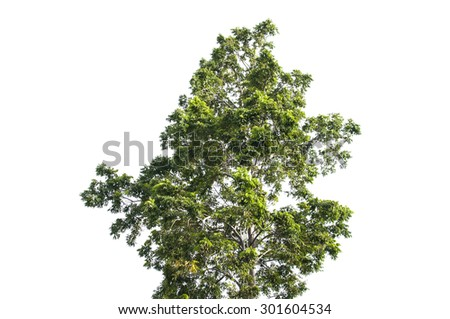 Isolated top of the big tree with white background. - stock photo