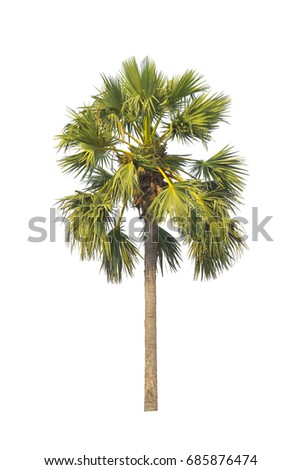 isolated tree coconut with white background and with clipping path