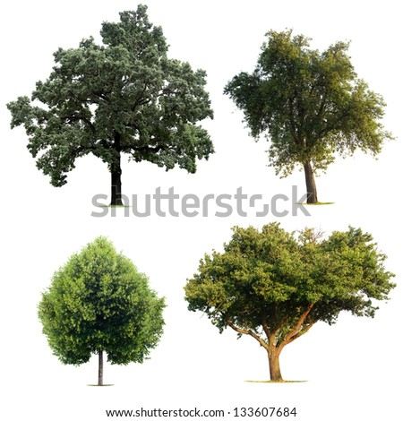 Isolated Tree Collection - stock photo