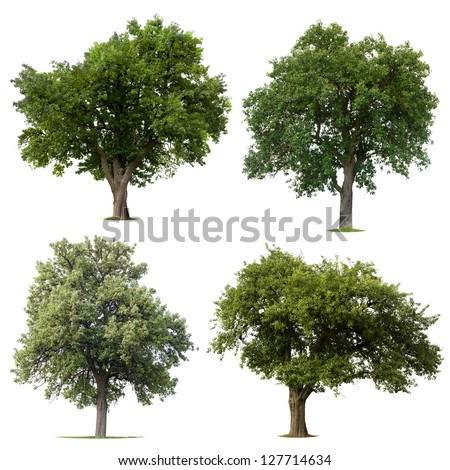 Isolated tree collection on white background - stock photo