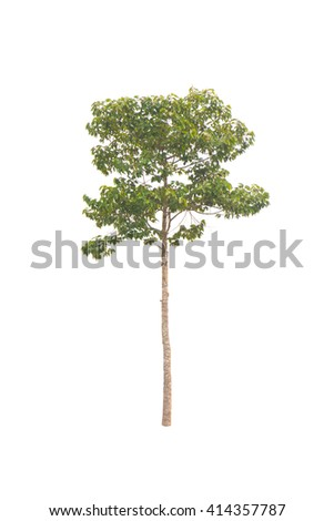 isolated tree on a white background