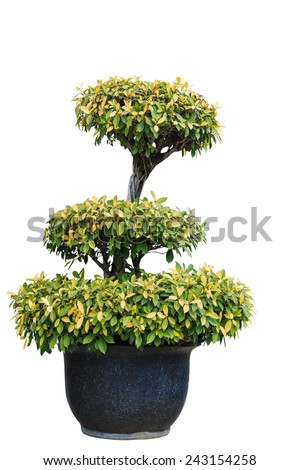 Isolated tree on clay pot with clipping path - stock photo