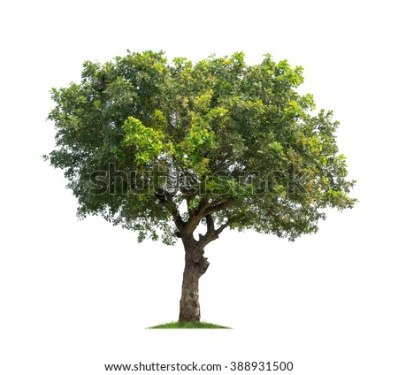 Purposes of essay tree in hindi