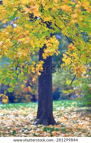 Isolated tree with golden leaves fallen on the ground in autumn, Letna Park, Prague, Czech Republic