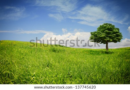 Isolated tree with green leaves on an open blooming meadow and beautiful colorful sky in the back - stock photo