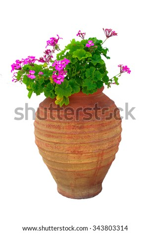 Isolated Typical Greek vase with pink geraniums flowers on a white background - stock photo