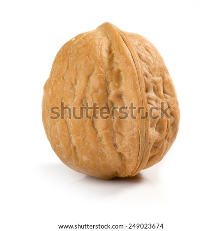 Isolated walnut on white background - stock photo