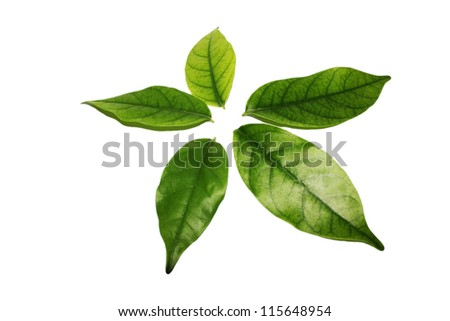 isolated white background.Five leaves of a tree