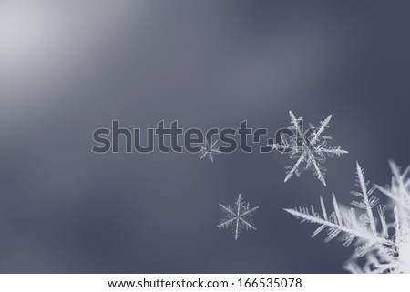 Isolated white snowflakes on blue background - stock photo
