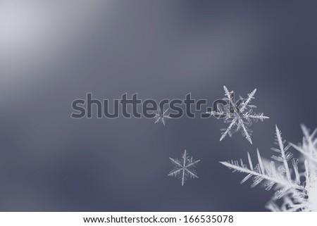Isolated white snowflakes on blue background - stock photo