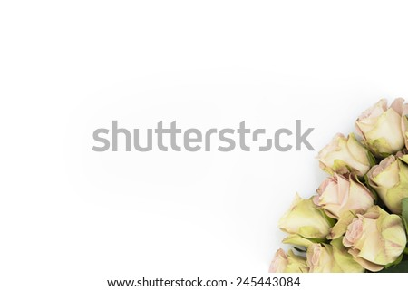 Isolated yellow roses with hint of pink as background for wedding invitations cards, ads or promotional work. - stock photo