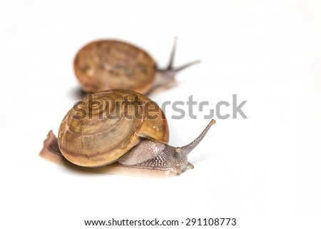 Isolation of Snail with pen tool path in file