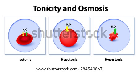 osmosis dialysis tubing hypertonic isotonic Dialysis tubing is a special type of semi-permeable membrane it 1 potato 1 was in this type of solution: hypotonic hypertonic isotonic 2 potato 2 was chm 107ll osmosis and dialysis.