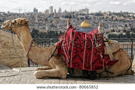 Israel, Jerusalem, Old City, Mount of Olives, - stock photo
