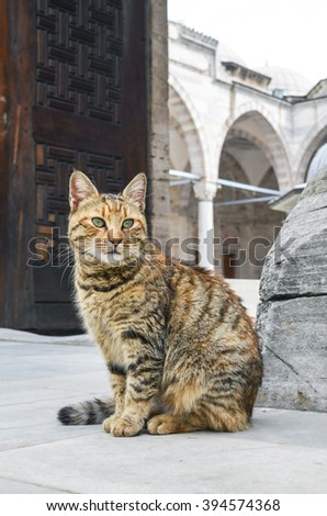 Istanbul homeless cat - stock photo