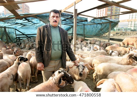 ISTANBUL, TURKEY - OCTOBER 12: Shepherd and sheeps in the barn before feast of the sacrifice (Kurban Bayrami) on October 12, 2012 in Istanbul, Turkey.