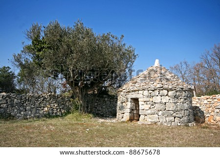 Istrian shelter kazun, stonewall and the olive tree - stock photo