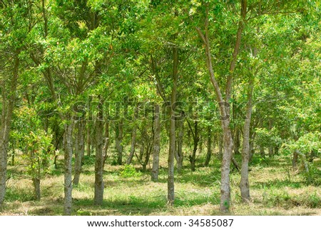 It is a beautiful bright green forest. - stock photo