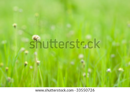 It is a natural beautiful green grass background. - stock photo