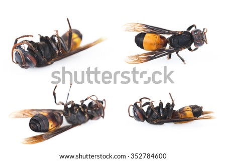 It is Four dead wasps isolated on a white. - stock photo