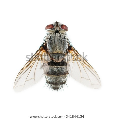 It is One dead fly isolated on white. - stock photo