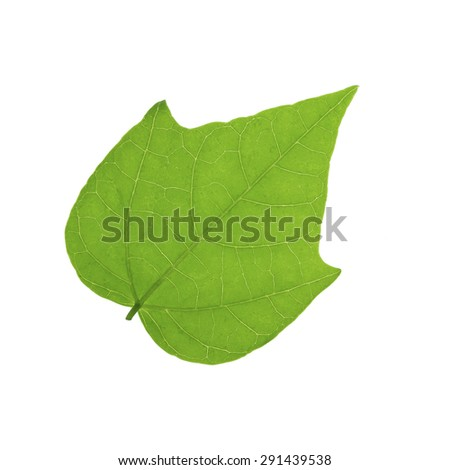 It is One green leaf isolated on white.