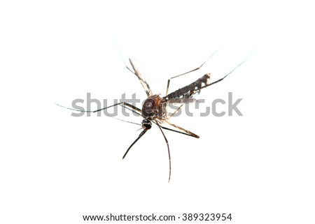 It is One mosquito isolated on white. - stock photo