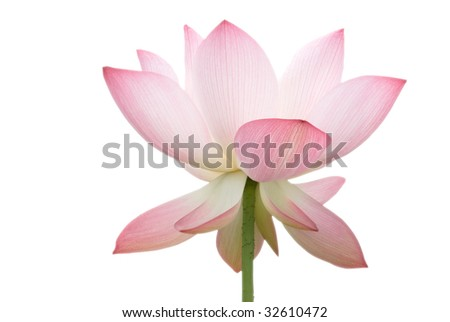 It is the beautiful lotus flower photo.