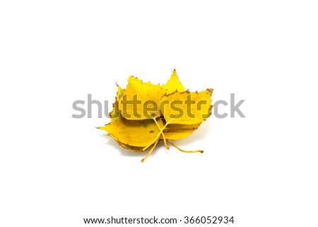 It is Yellow leaf isolated on white. - stock photo