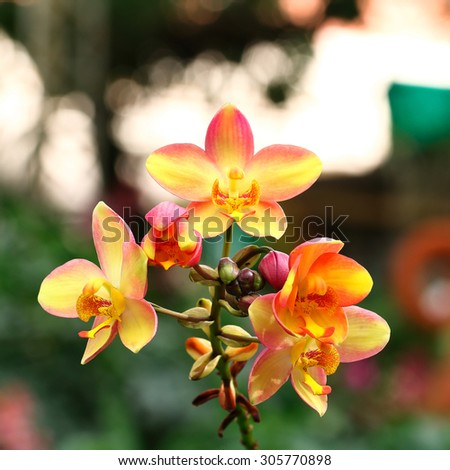 It is Yellow orchid for pattern and background. - stock photo