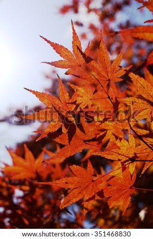 It turns red and yellow autumn leaves, World Heritage Kiyomizu Temple, Kyoto, Japan,