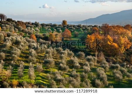 Italian Countryside - stock photo