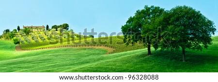 Italian farm with wonderful vineyard and cute trees in shadow - stock photo