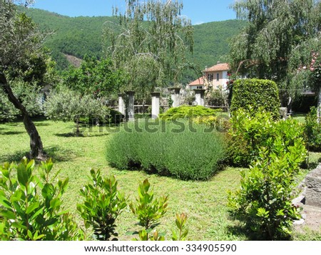 Italian green garden with varieties of tree and plant in a sunny day in Tuscany