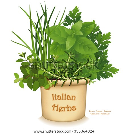 Italian Herb Garden Planter, traditional flavors for Mediterranean cuisine, Oregano, Garlic Chives, Sweet Basil, Flat Leaf Parsley, Rosemary, in clay flowerpot crock, isolated on white.  - stock photo