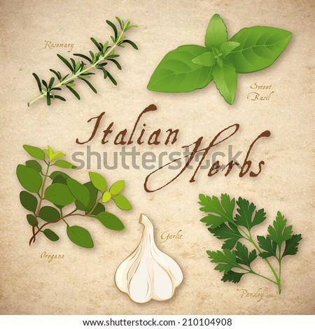 Italian Herbs for cooking, Rosemary, Garlic, Italian Oregano, Sweet Basil and Italian Flat Leaf Parsley on rustic texture background.  - stock photo