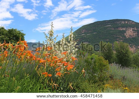 italian landscape with mediterranean plants - day lily and yucca