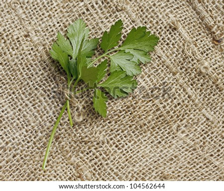 Italian parsley on burlap background.