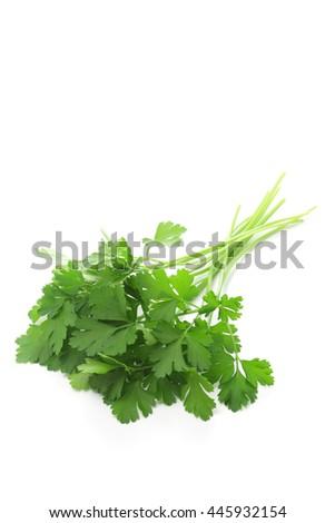 Italian parsley on white background - stock photo