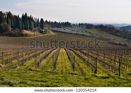Italian vineyard in autumn - stock photo