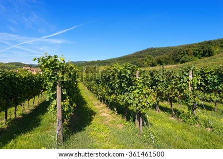 Italian Vineyards - Valpolicella Wine / Typical Italian red grape vineyards at the base of the hill with blue sky - stock photo