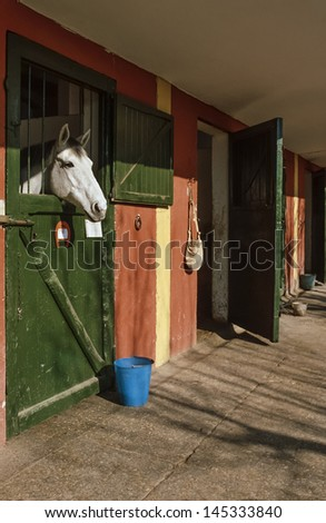 Italy, countryside, a horse in a paddock - stock photo